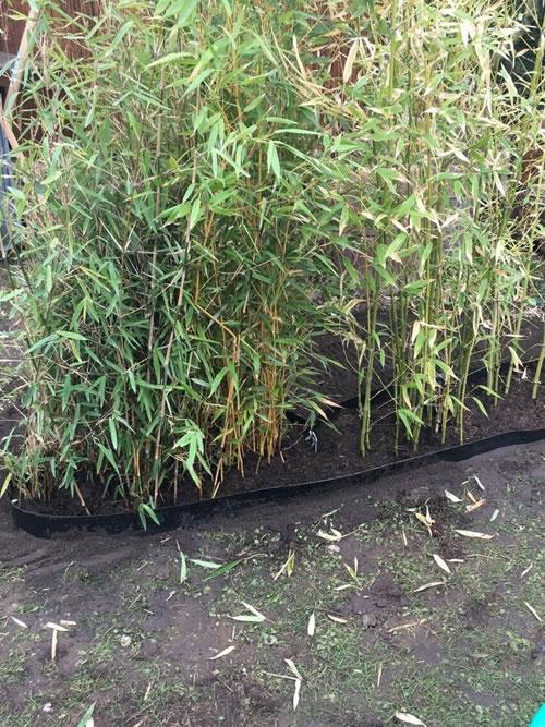 Bambussperre - Bambus mit Sperre